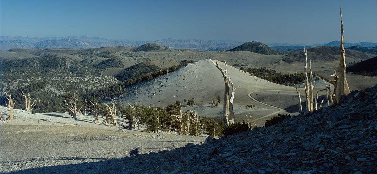 Owens Valley CA - Brycle Cone Pines