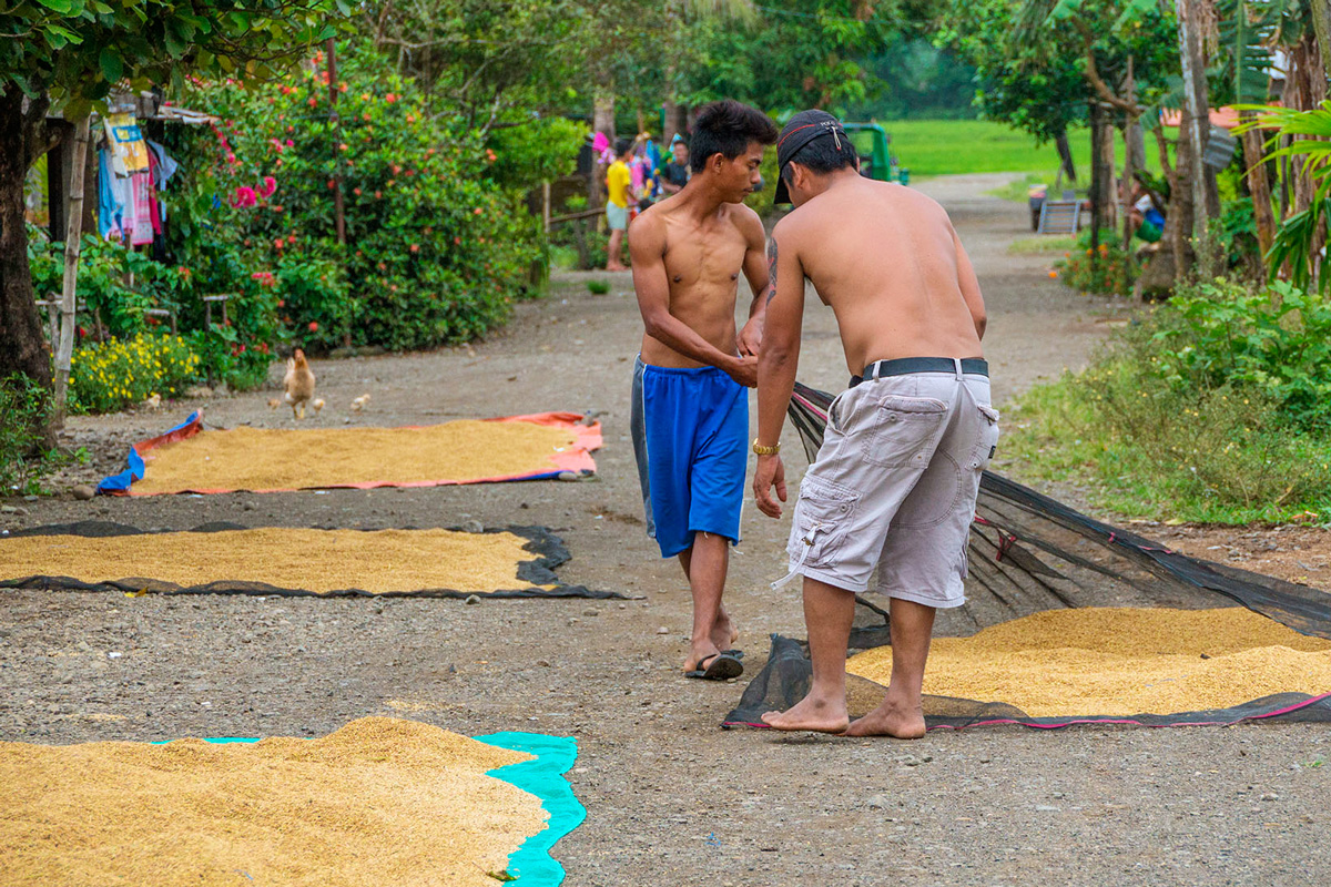 Philippines - Santa Ana - drying rice
