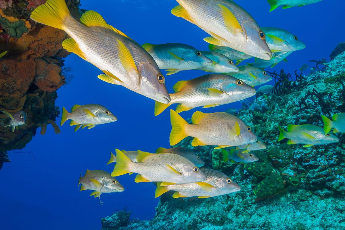 Mexico, Cozumel, Tauchen, Fische
