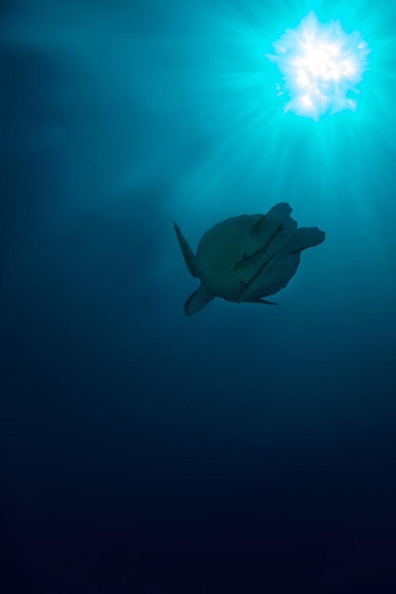 Moalboal, Cebu - Schildkröte