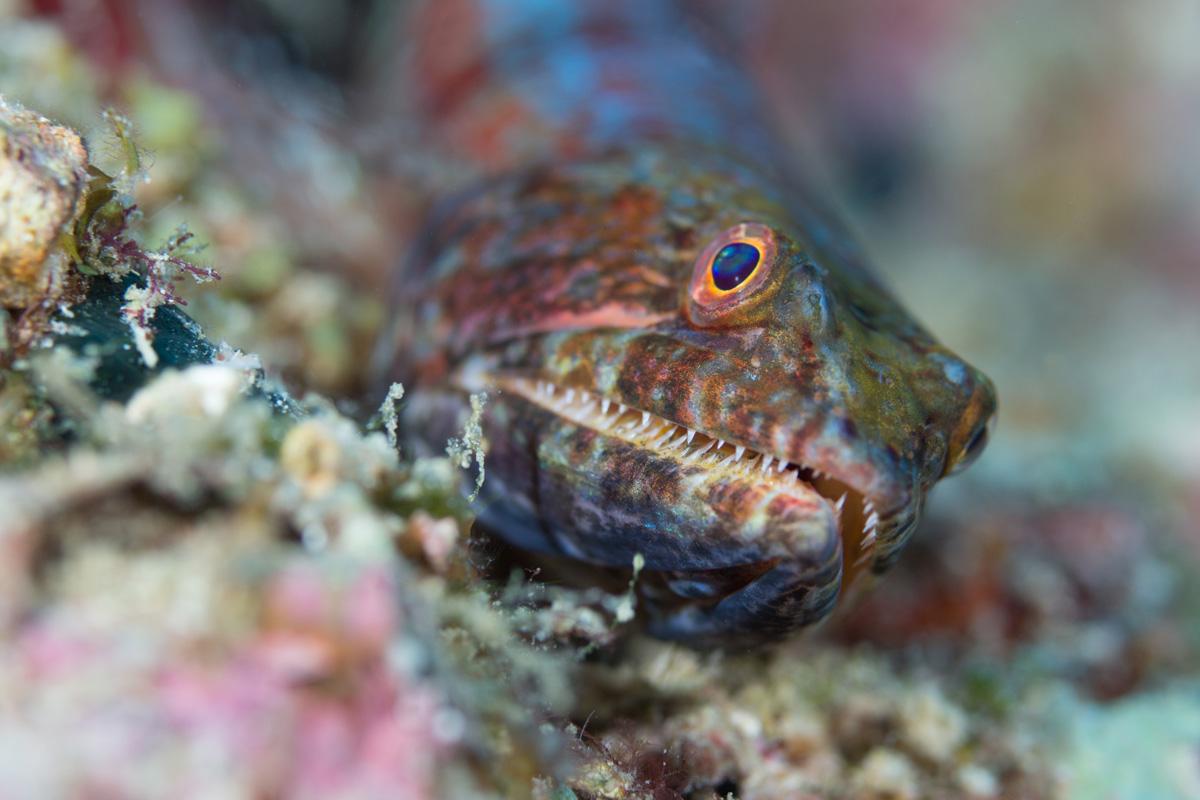 Moalboal, Cebu - Fisch