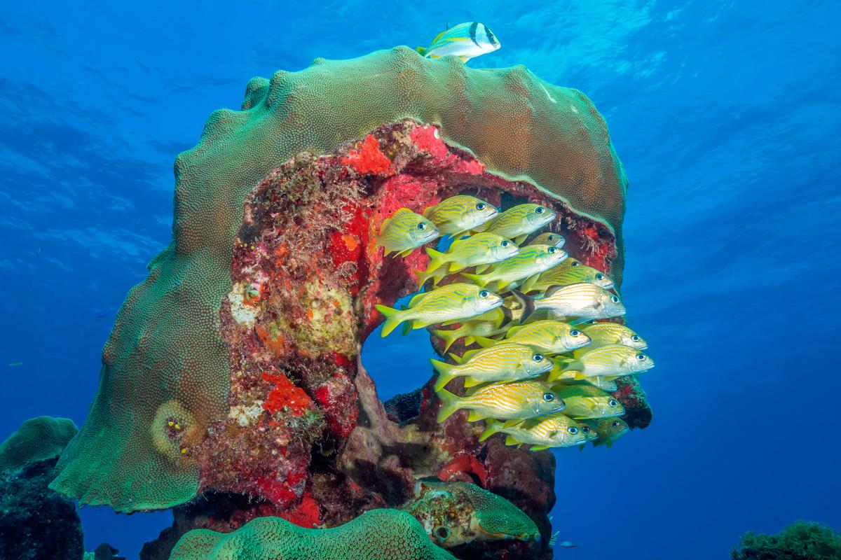 Mexico, Isla Mujeres, Korallenriff