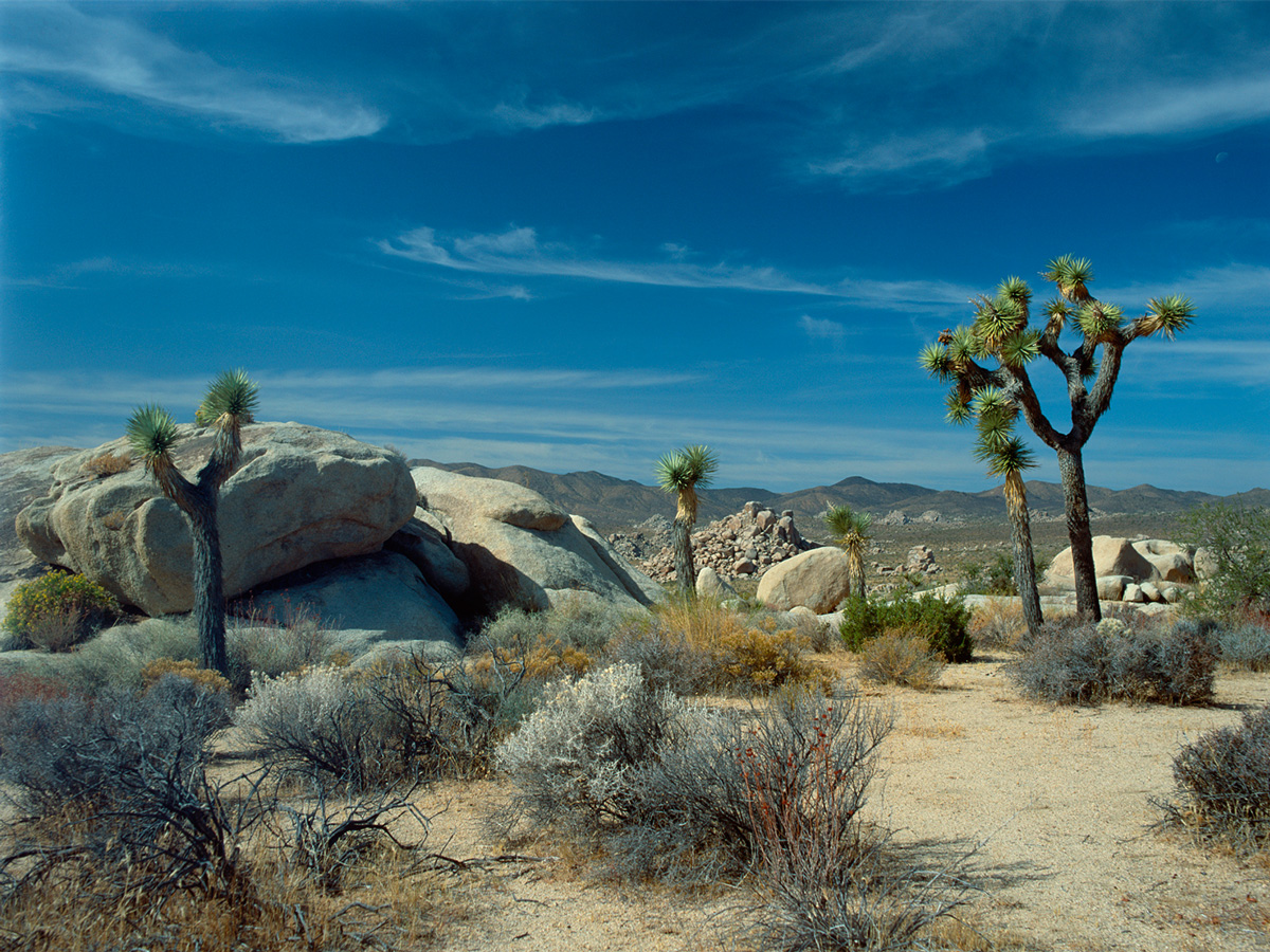 USA - Joshua Tree