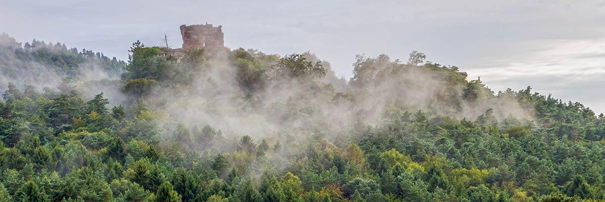 Pfalz, ruin Drachenfels with fog