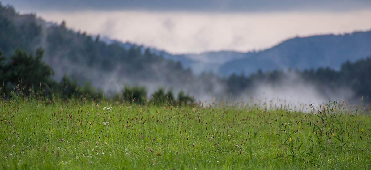 Pfalz, Meadow with Mist