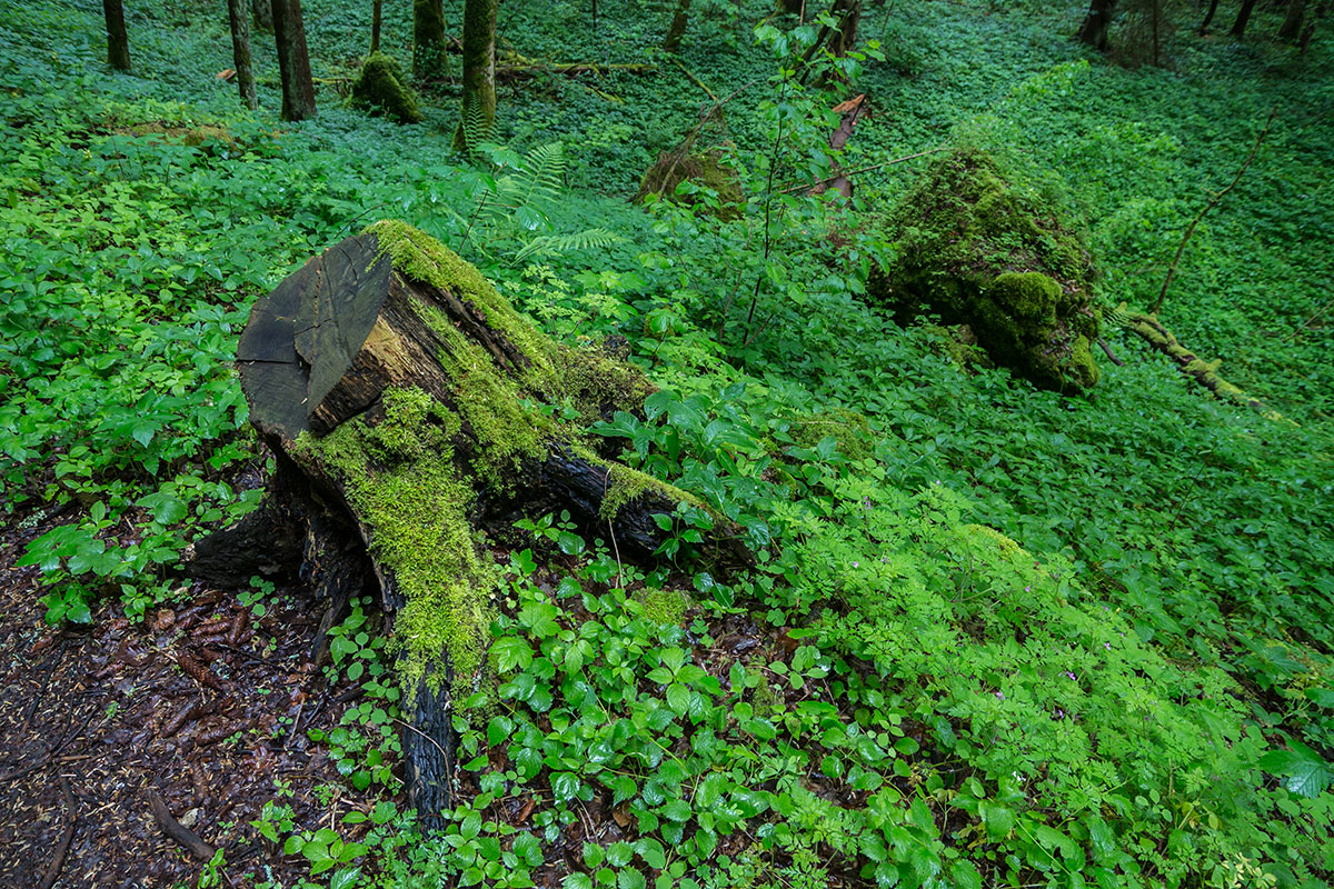 Frankenjura, Baumstumpf