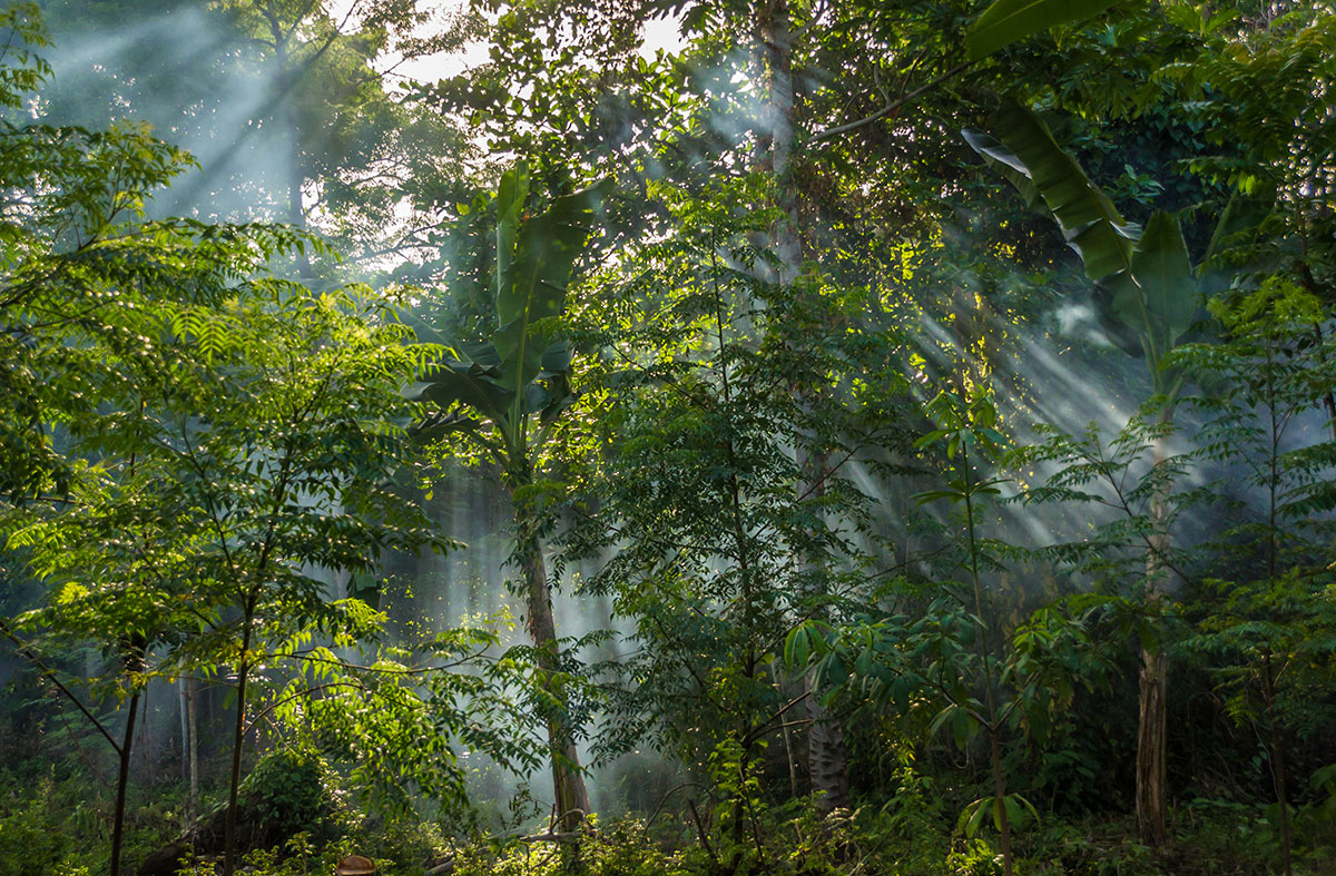 Indonesia, Manado, Bunaken Island, Rainforest, Mist between Trees