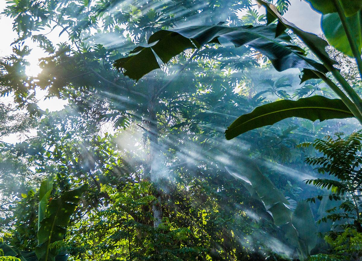 Indonesia, Manado, Bunaken Island, Rainforest, Mist between Trees