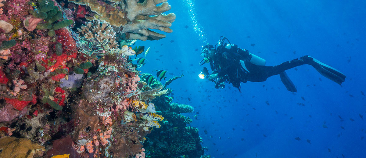 Indonesia, Manado, Bunaken Island, Diving, Diver with Corals