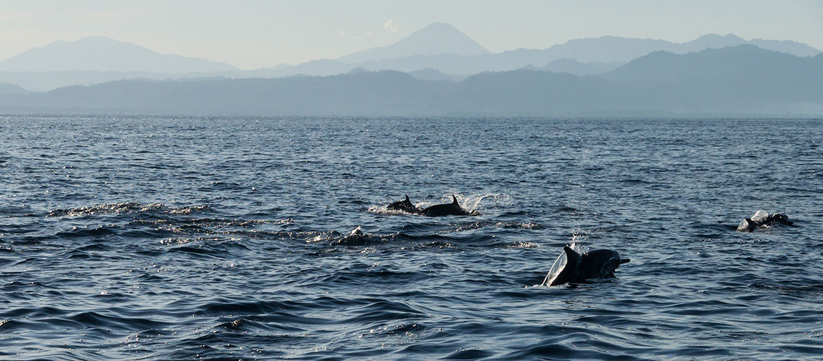 Indonesia, Manado, Bunaken Island, Dolphin watch Tour, Dolphin in front of Mountains