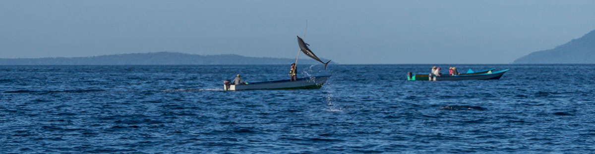 Indonesia, Manado, Bunaken Island, Dolphin watch Tour, Dolphin jumping