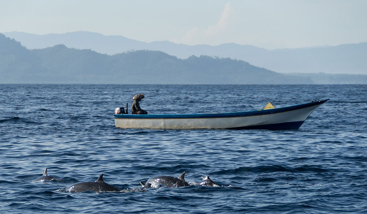 Indonesia, Manado, Bunaken Island, Dolphin watch Tour