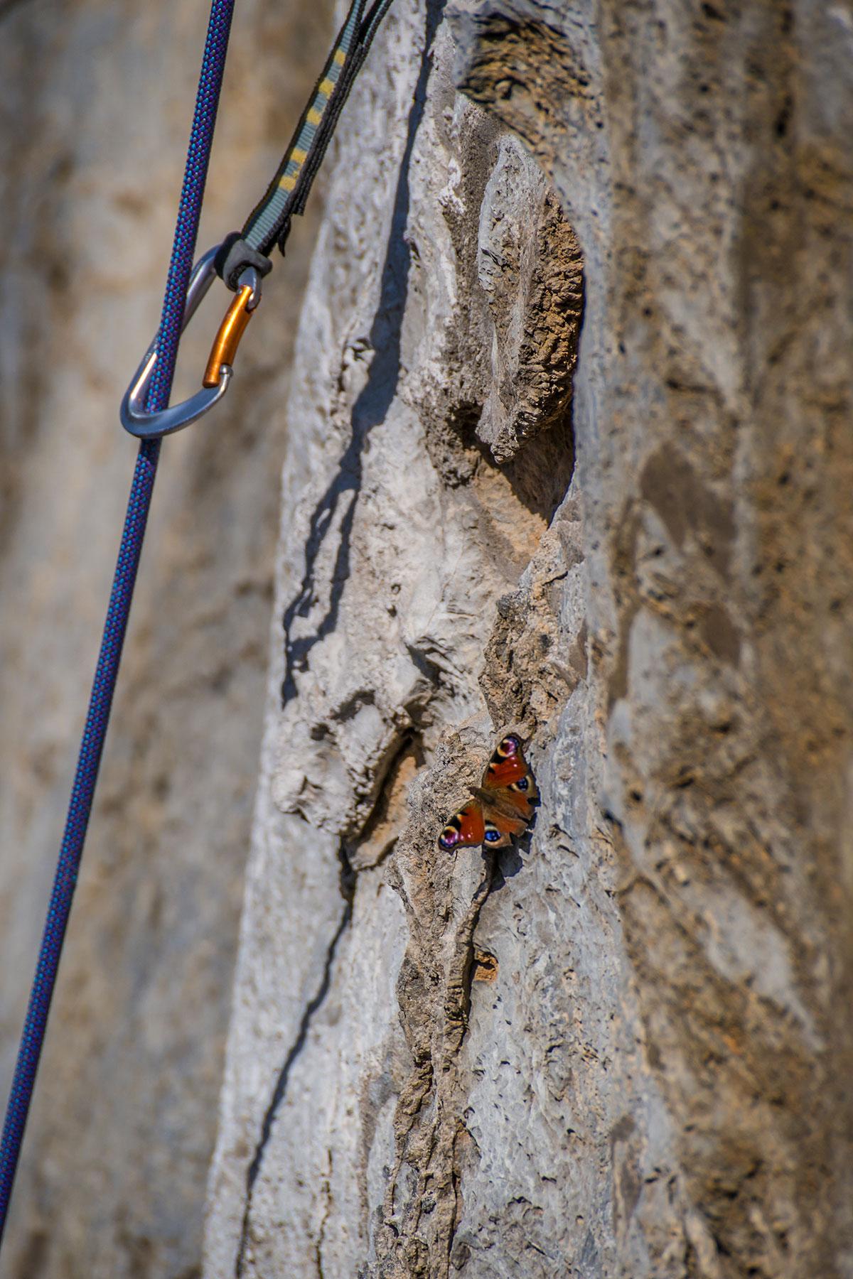 """Warstein, Hillenberg, Route """"Schmetterlings Effekt"""" (Einstiegsvariante zu """"Sidewinder""""), 9-, Fotograf: Thihamy Nguyen"""