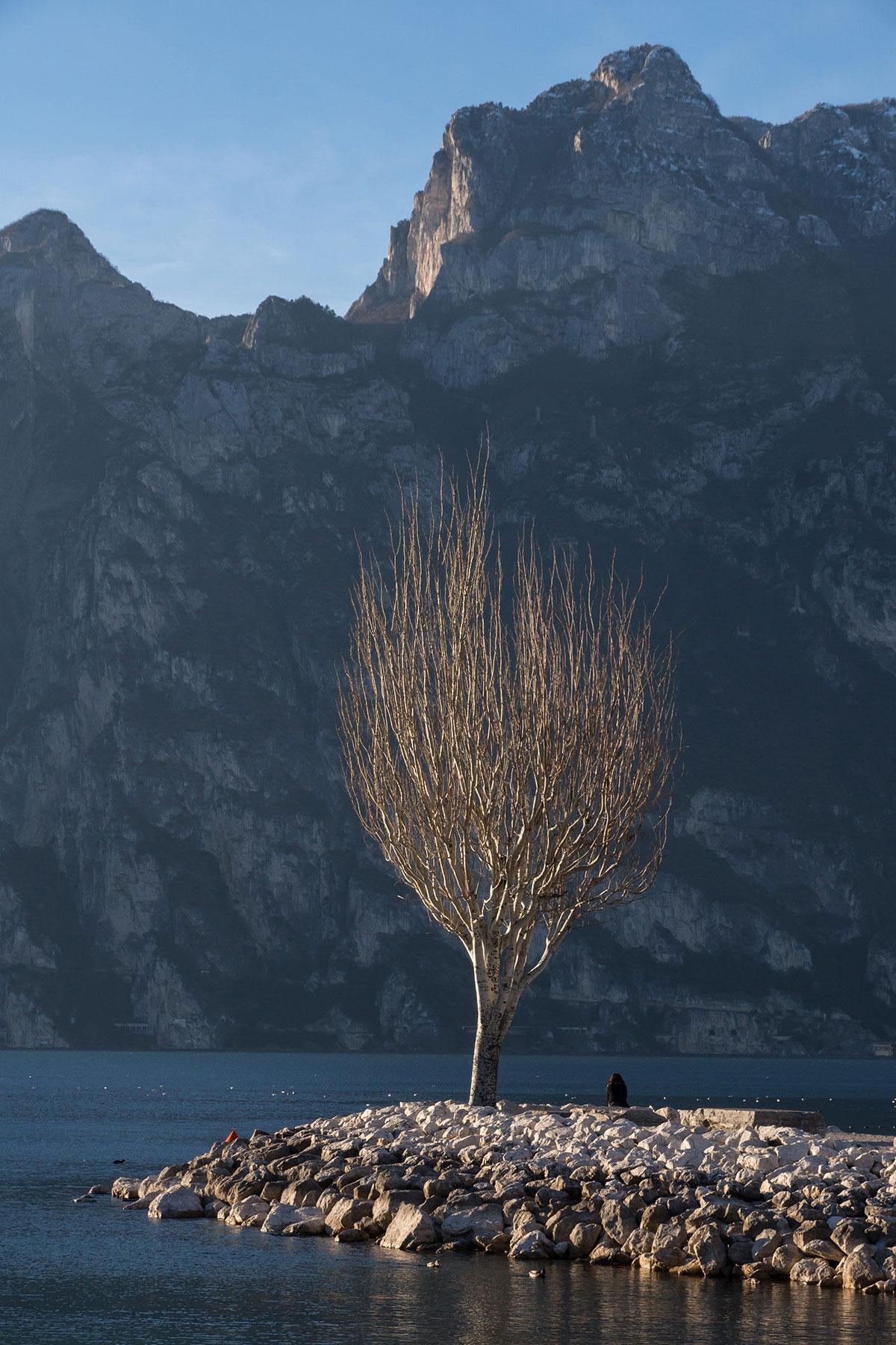 Einsamer Baum in Torbole am Gardasee