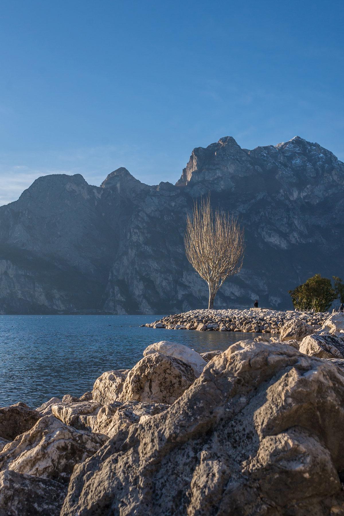 Felsiger Strand in Torbole am Gardasee mit einsamem Baum