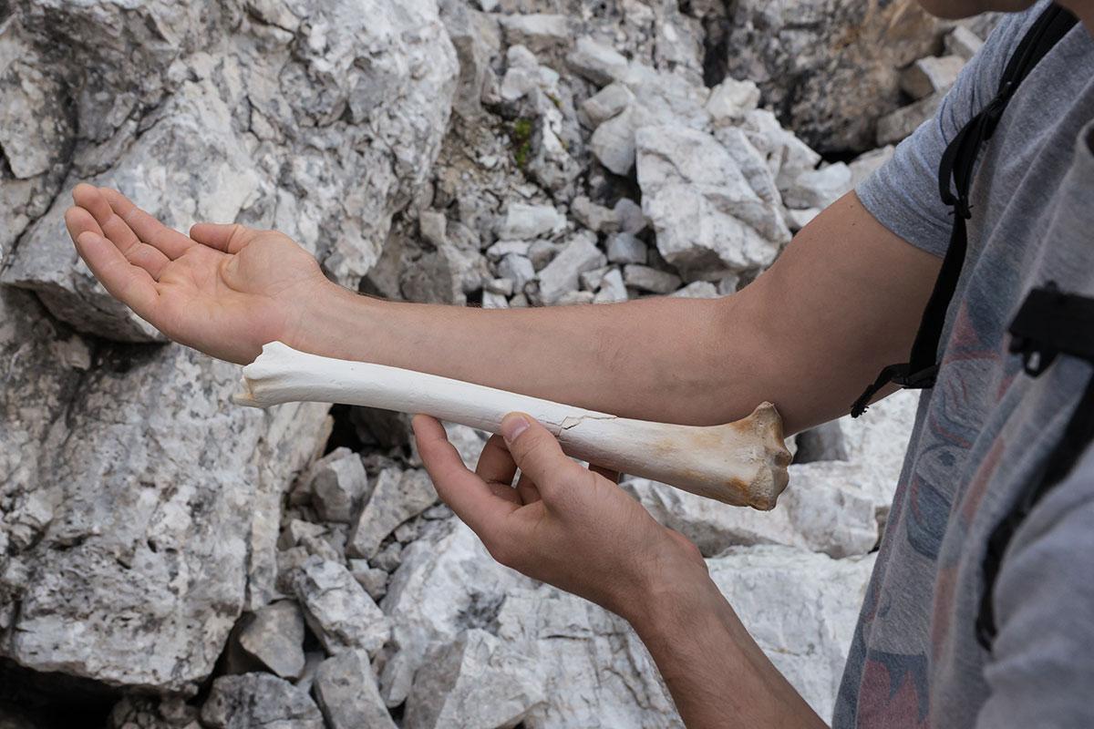Knochenfund Unter den Nordwänden der Drei Zinnen