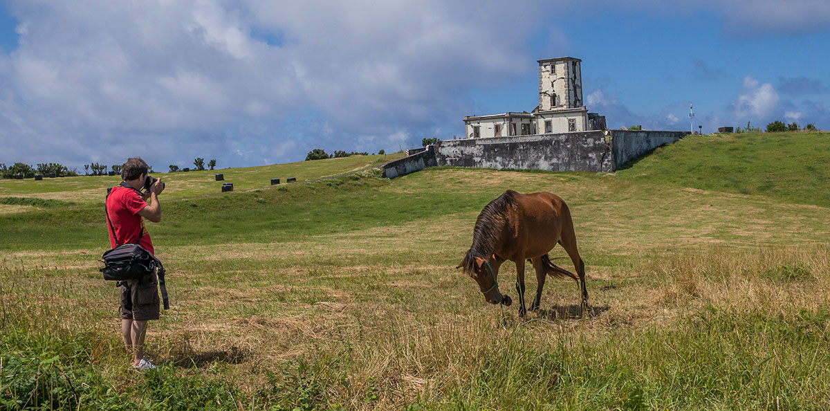 Azoren, Faial, Leuchtturm Ruinen bei Ribeirinha mit Pferd