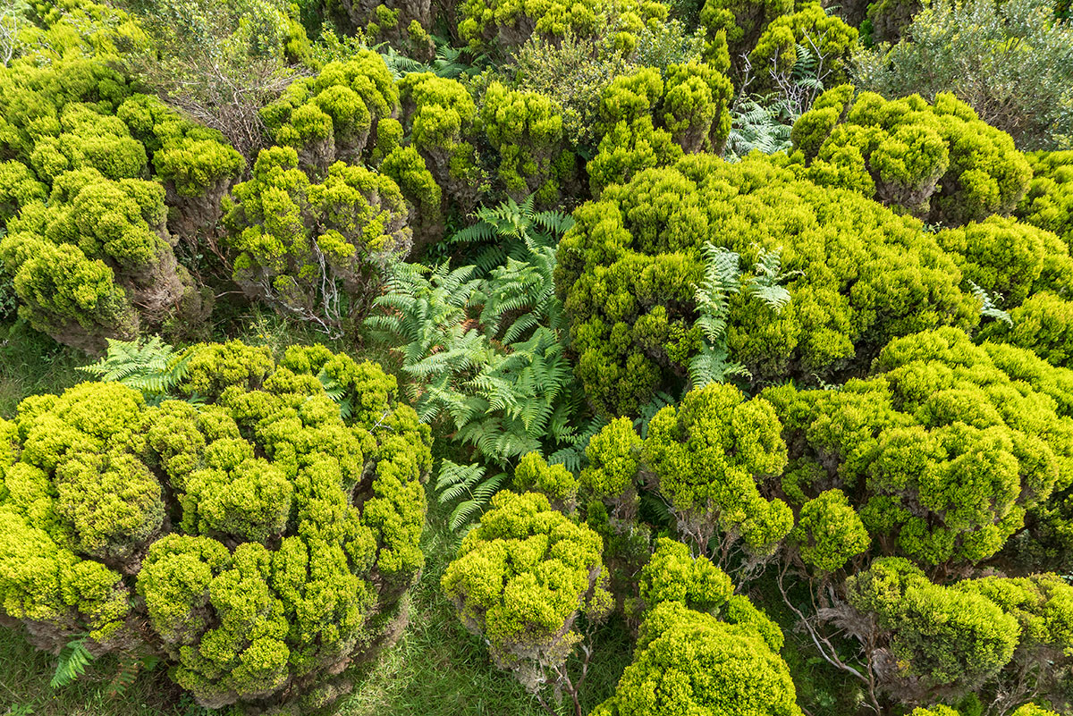 Azoren, Faial, Pedro Miguel Botanical Garden