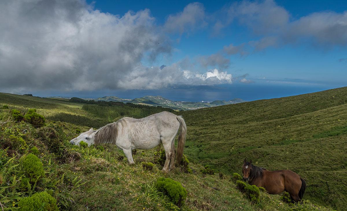 Azoren, Faial, Caldeira mit Pferden