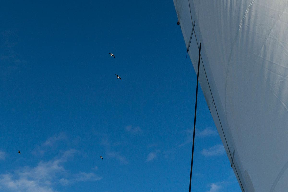 Azoren, Segeln auf der Saildive mit Seevögeln