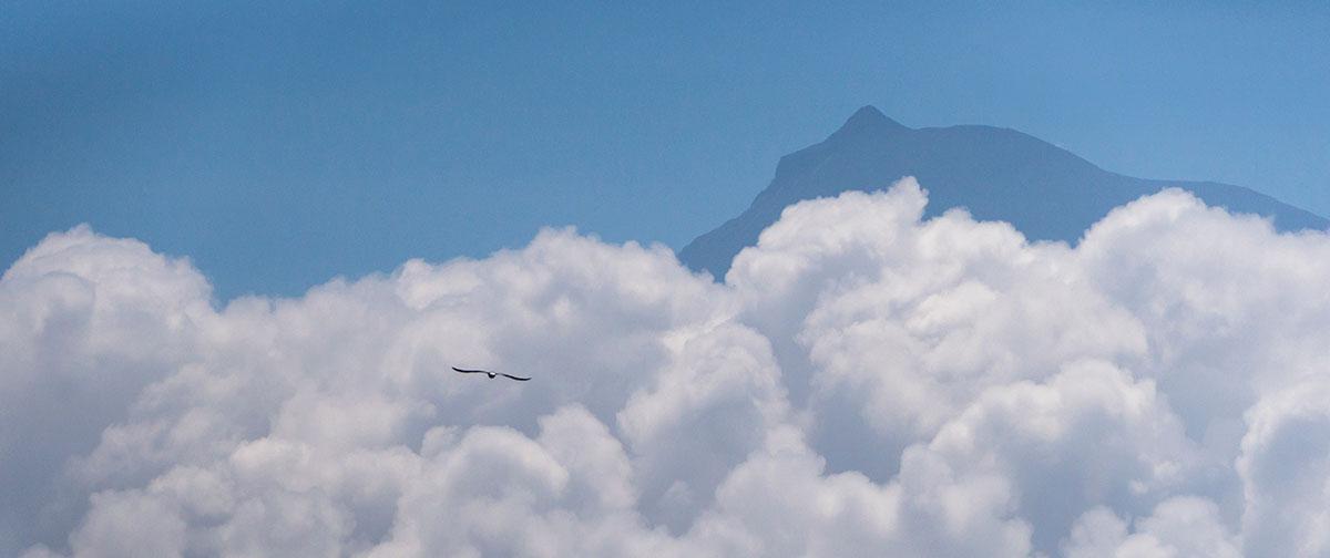 Azoren, Möwe mit Blick auf Pico