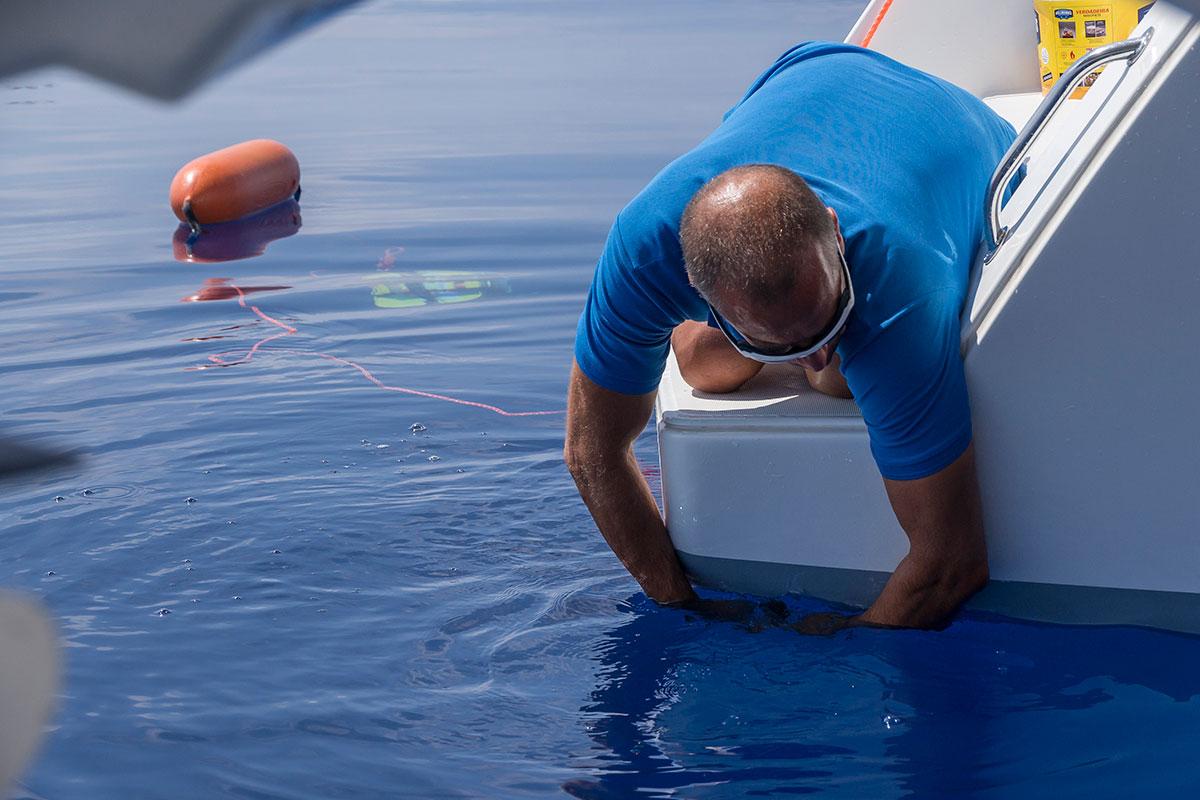 Azoren, anlocken der Blauhaie an den Princess Alice Banks