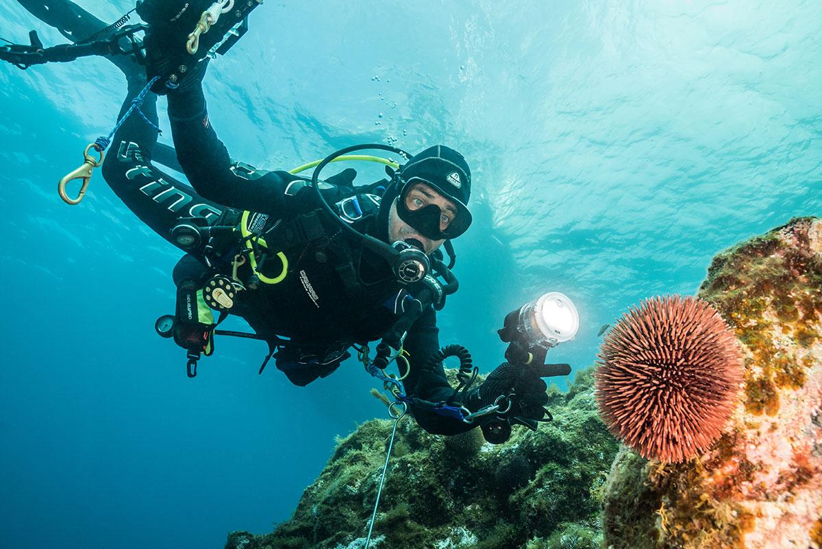 Azoren, Taucher mit Seeigel