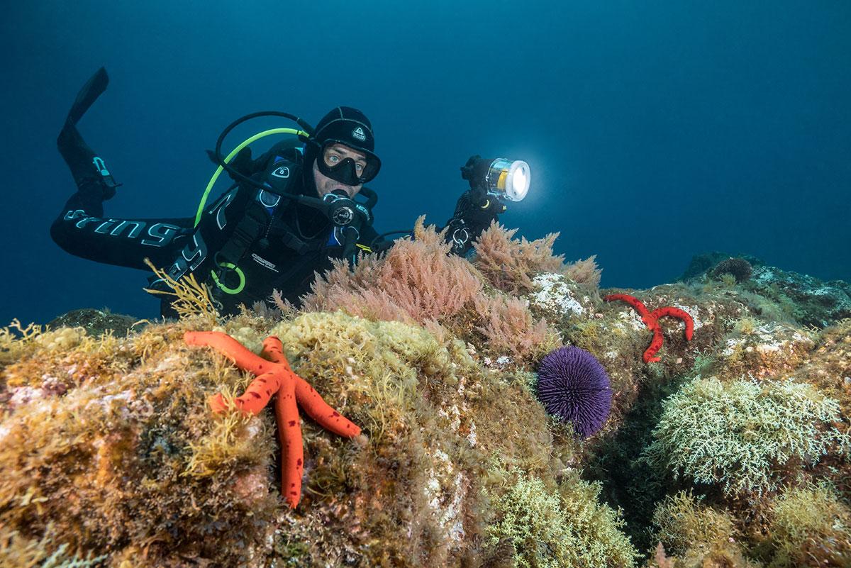 Azoren, Taucher mit Seeigel und Seesternen