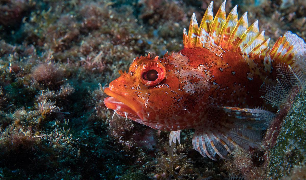 Azoren, Fisch