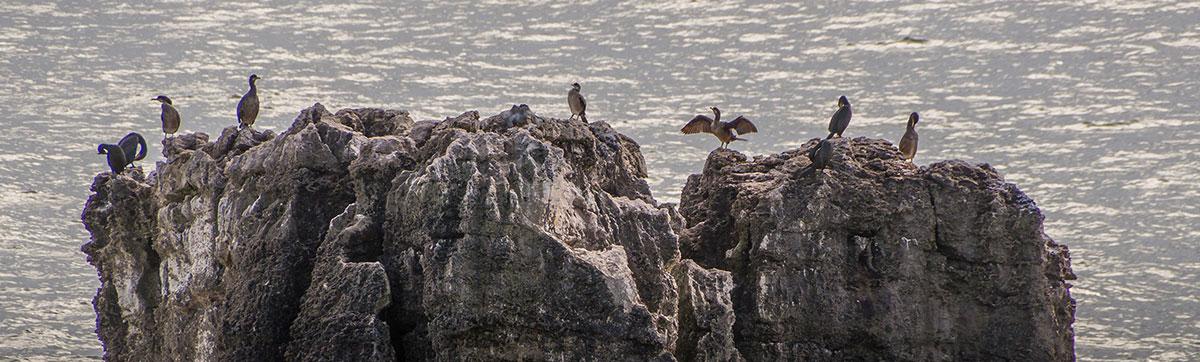 Portugal, Cascais, Boca do Inferno, Seevögel