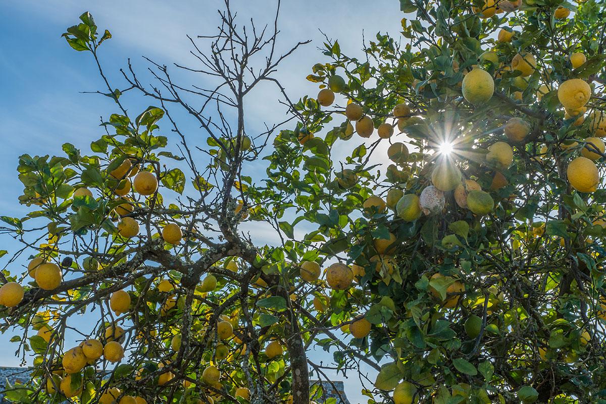 Portugal, Orangenbaum