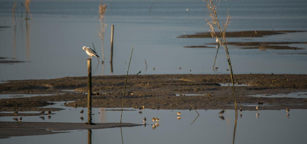 Portugal, Reserva Natural do Estuário do Sado, Seevogel