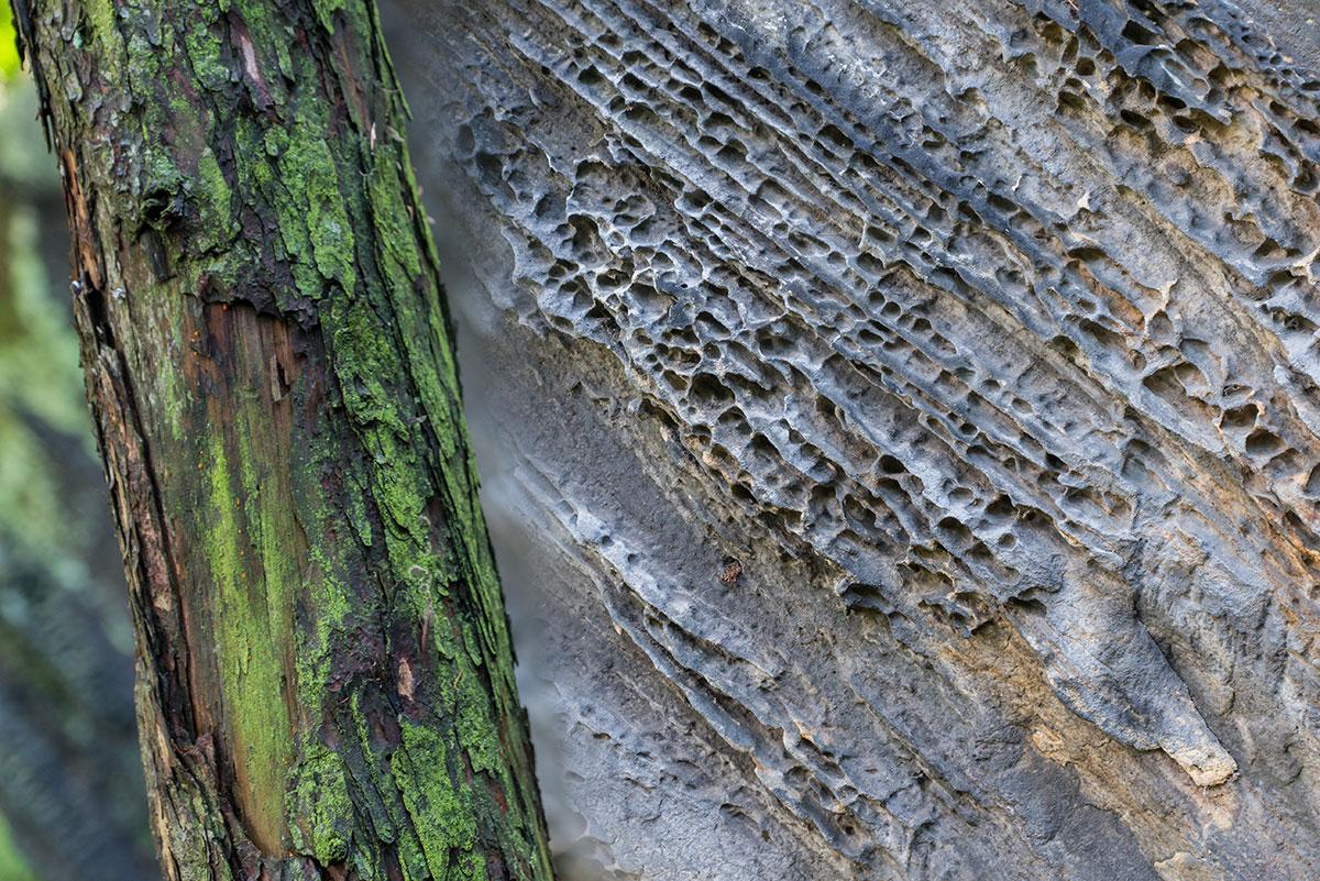 Elbtal, Fels- und Baumstruktur
