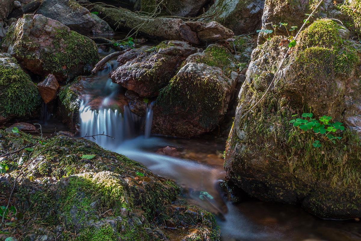 Thüringer Wald, Bach
